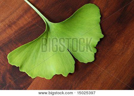 Ginkgo leaf on beautiful acacia wood background.