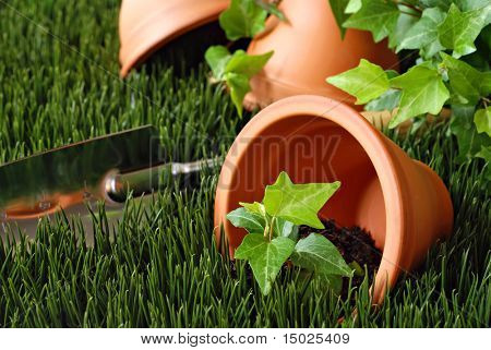 Clay flower pots on grass with ivy plant and gardening spade in background.  Close-up with shallow dof.
