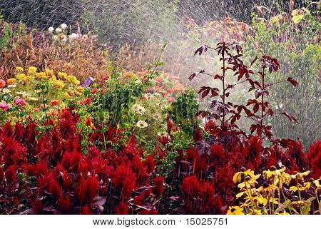 Late summer flower garden with sprinkler spraying water for abstract effect.