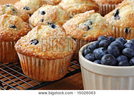 Frisch gebackene Blaubeere Muffins am Kühlregal mit Schüssel Blaubeeren.  Makro mit shallow Dof.