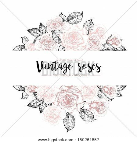 Vector hand drawn template illustration of roses isolated on white background. Vintage pastel colored flowers engraved collection. For restaurant store market party design or poster banner card.