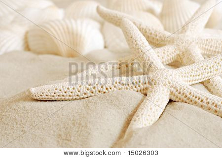White finger starfish and seashells on white sand.  Macro with extremely shallow dof.