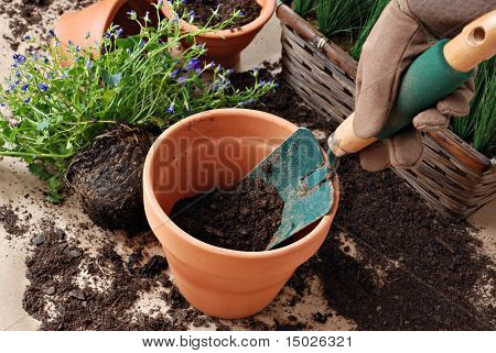 Gardeners hand in work glove with spade and dirt in clay pot.  Plants in background.  Close-up with shallow dof.  Focus on spade.