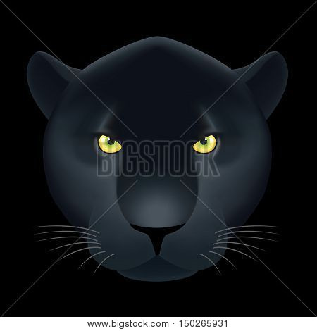 Panther head on black background. Vector illustration contained gradient meshes.