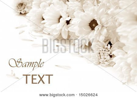 Soft focus sepia toned floral background with copy space.
