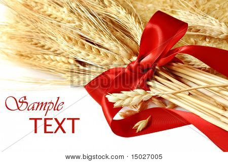 Spikes of wheat tied with red ribbon on white background with copy space.  Macro with shallow dof.