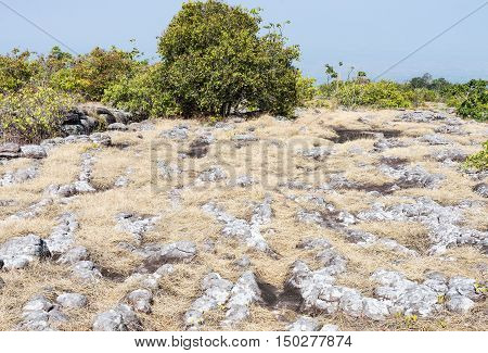Sandstone node with dry grass field in the high mountain of the national parkThailand.