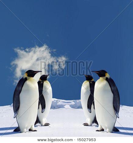 Four Penguins in Antarctica