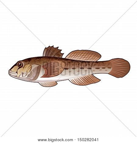 Goby, isolated raster illustration on white background