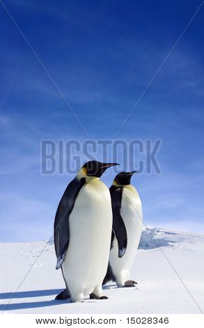 Dos pingüinos en la Antártida