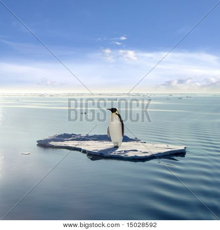 Emperor Penguin on a Floating Ice Patch