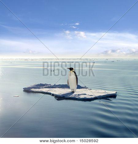 Kaiserpinguin auf eine schwimmende Eis-Patch