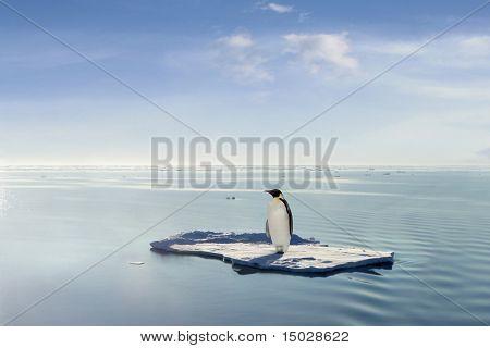 Ein Pinguin gelang zu bekommen auf eine Eisriesenwelt durch Antarktis driften.