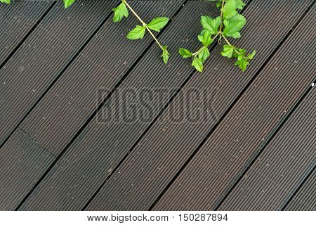 Wood deck floor with some green leaves for background design
