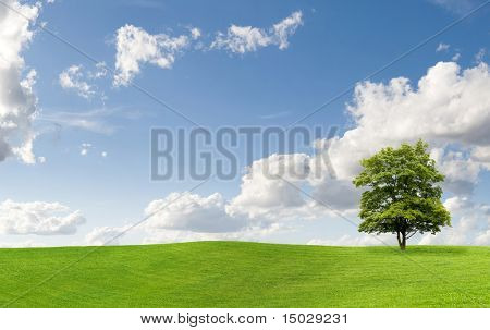 Maple tree on a meadow against a cloudy sky