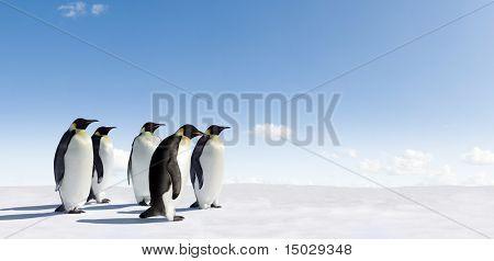 Fünf Kaiserpinguine in der Antarktis