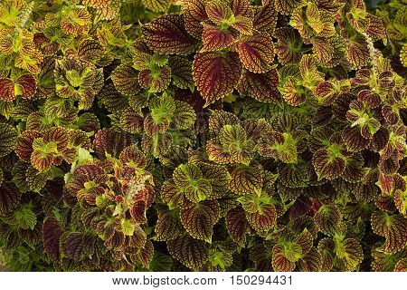 Leaves with purple veins fresh background and fractal effect