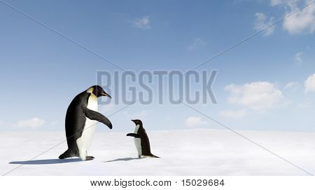 Adelie Penguin and Emperor Penguin connecting with each other.