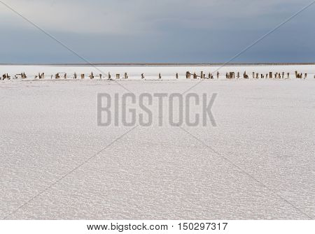 The lake is covered with a thick layer of salt. The remains of wooden piles protrude from the bottom.