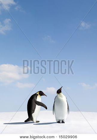 Penguin gets rejected