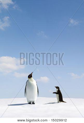 Emperor Penguin rejects Adelie penguin