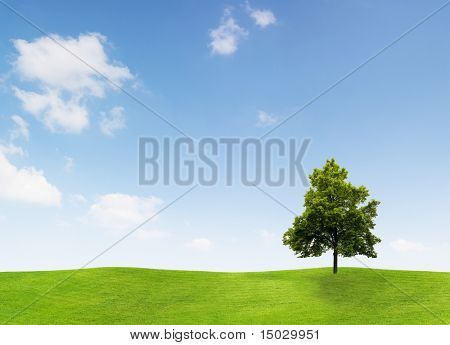 Linden Tree on a meadow