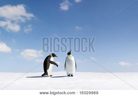 Pinguin Ruft abgelehnt