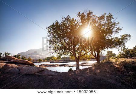 Beautiful Landscape With Tree At Sunrise