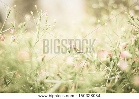 Wild beautiful flower with vintage filter unfocused