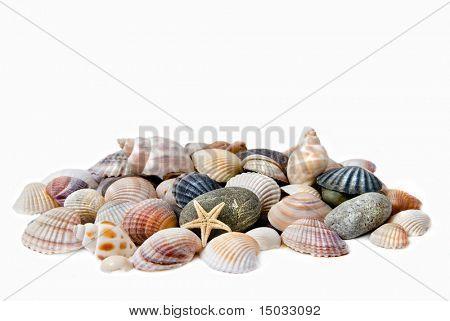 Muscheln mit Steinen, isoliert auf weiss