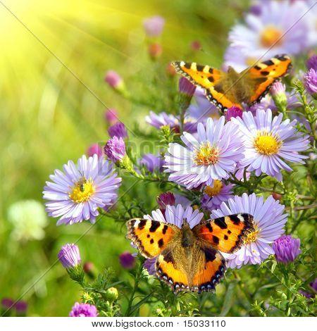 zwei Schmetterling auf Blumen