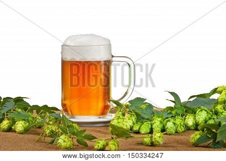 glass of beer with hop cones on the white background