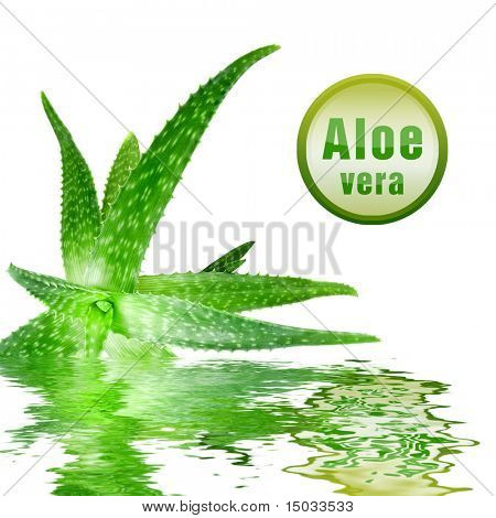 close-up photo of green aloe vera with icon isolated on white