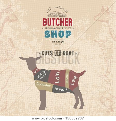 Cuts of goat. Butcher shop retro poster scheme and diagram - Goat. Vintage hand drawn vector Illustration