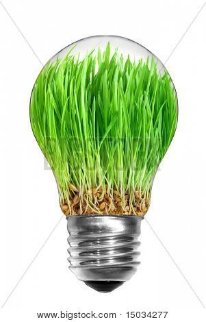 Natural energy concept. Light bulb with green grass inside isolated on white