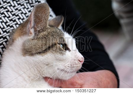 picture of a cute stray kitten on a hands