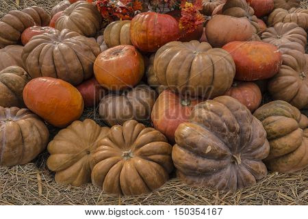 A lot of different shape and color pumpkins stacked pile.