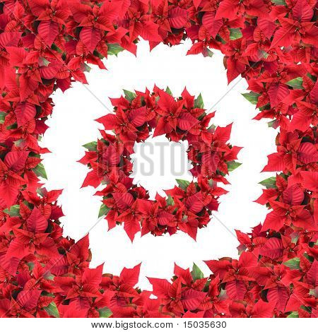 round frame with wreath from christmas flowers isolated on white