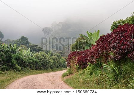 Rural road through the foggy landscapes towards the cloud forests surrounding the small village of coffee growers in the highlands of Honduras. Santa Barbara National Park