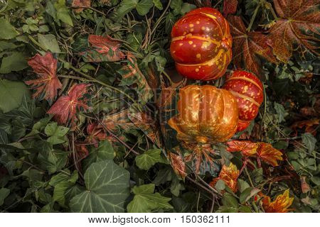 Autumn still life with red bright decotative pumpkins