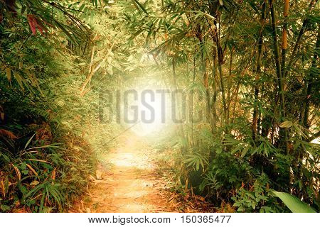 Surreal colors of fantasy landscape at tropical jungle forest with sun rays shining through tunnel in dense vegetation