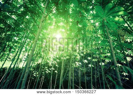 Sunny day in fantasy tropical forest with sun rays shining through dense vegetation of jungle plants