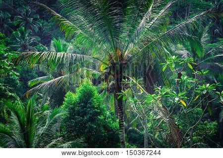 Amazing tropical nature. Abstract rainforest landscape with jungle plants