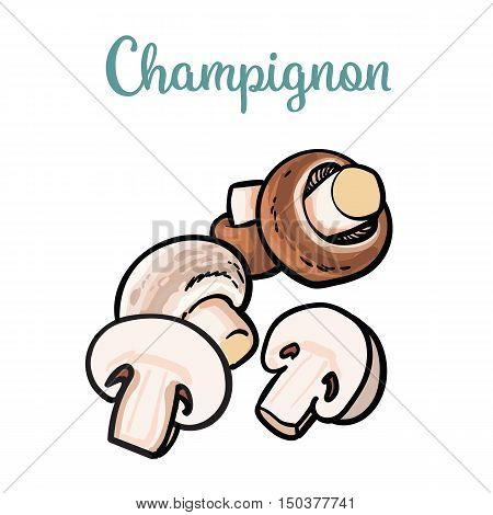Set of champignon edible mushrooms sketch style illustration isolated on white background. Collection of edible mushrooms - button mushroom