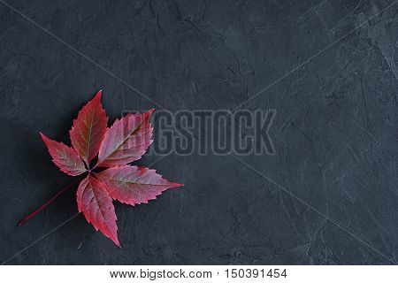 Red Fall Leaves Of Virginia Creeper