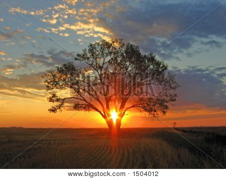 Sunrise Shines Through Tree