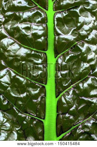 bright abstract background of green leaf with bright light green veins
