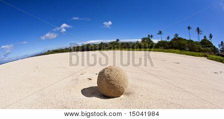 Hawaiian Snowball