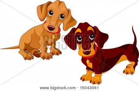 Two isolated dachshunds on the white background
