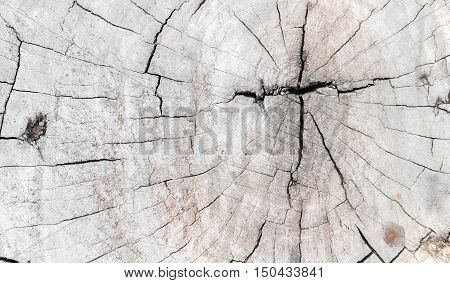 Old Tree trunk Wood texture abstract background